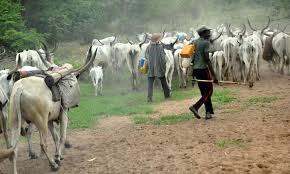 Two Fulani herdsman tape 72-year - old woman into coma in Ondo state