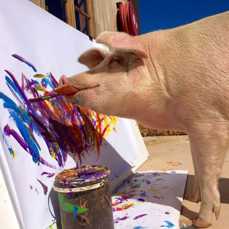 A painting made by a pig sold for several thousand dollars